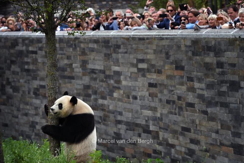 panda verblijf ouwehands dierenpark